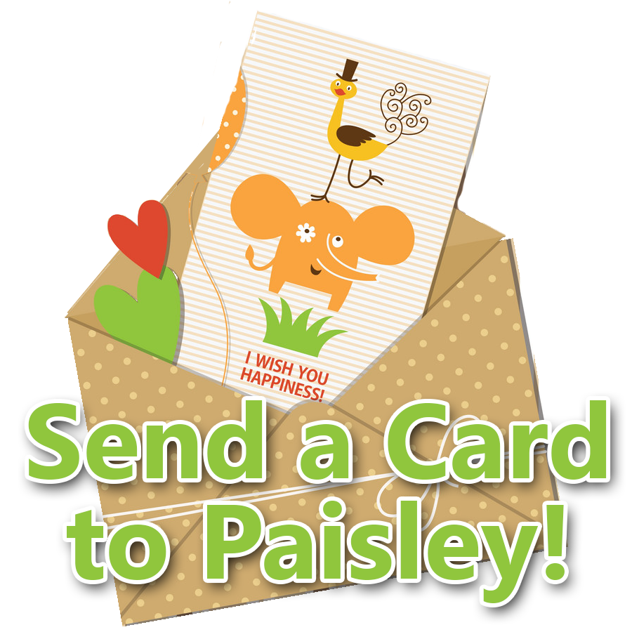 Send a Card to Paisley